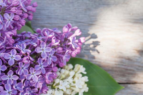 Foto stock: Colorido · flores · jardim · tabela · topo
