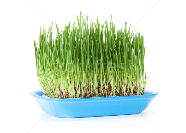 Green grass. Isolated Stock photo © karandaev