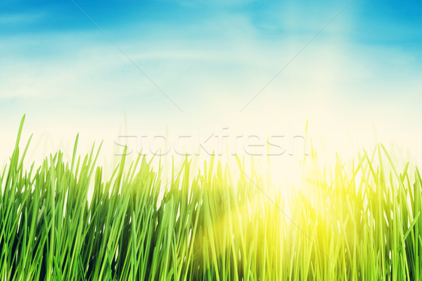 Groen gras veld blauwe hemel zon heldere hemel Stockfoto © karandaev