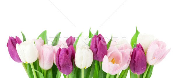 Colorful tulips Stock photo © karandaev