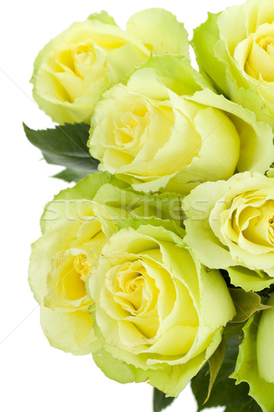 Green roses bouquet Stock photo © karandaev