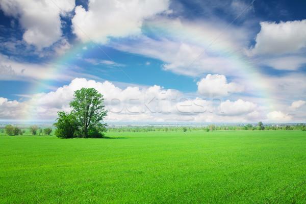Yeşil ot alan mavi gökyüzü bulutlar gökkuşağı yaz Stok fotoğraf © karandaev