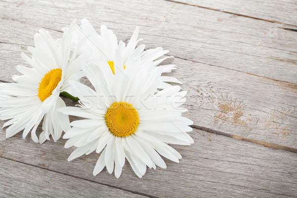 Daisy ромашка цветы деревянный стол фон лет Сток-фото © karandaev