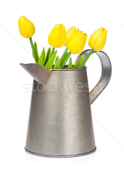 Amarelo tulipas regador isolado branco páscoa Foto stock © karandaev