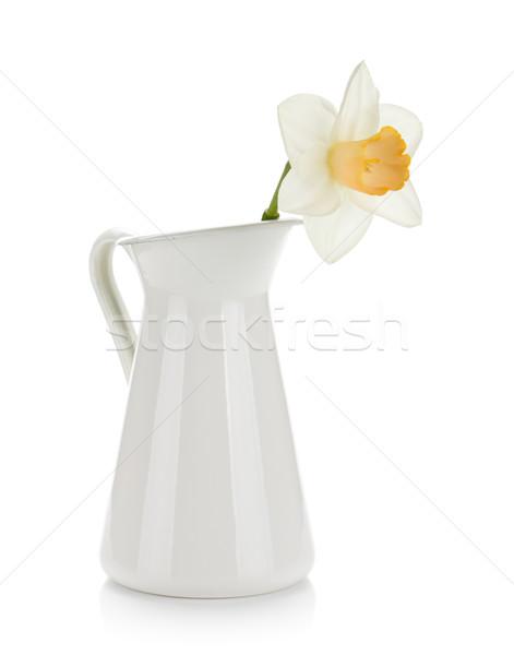 Witte narcis geïsoleerd natuur schoonheid Stockfoto © karandaev