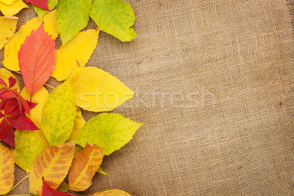 Autumn leaves over burlap texture background Stock photo © karandaev