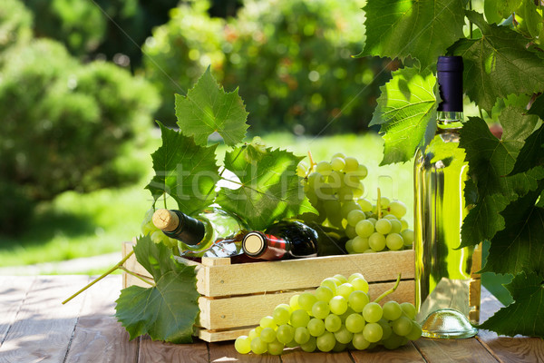 White and red wine bottle, vine and grapes Stock photo © karandaev