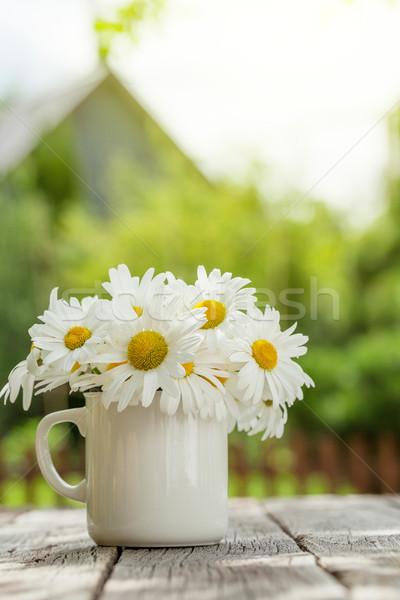 Daisy camomilla fiori legno giardino tavola Foto d'archivio © karandaev