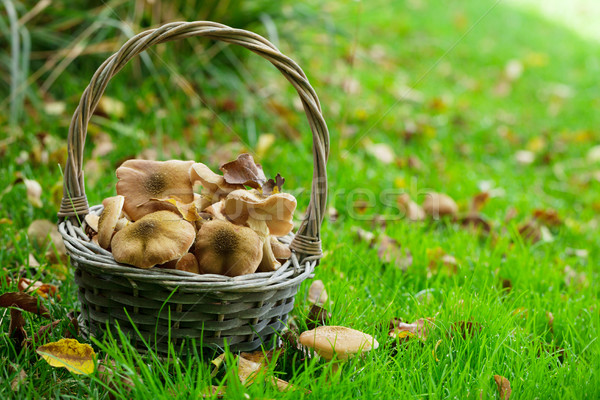 Foto stock: Outono · cogumelos · cesta · grama · prado · ver