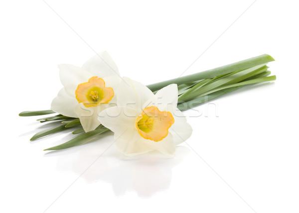 Witte narcissen geïsoleerd natuur schoonheid kleur Stockfoto © karandaev