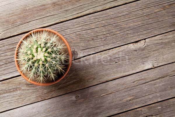 Kaktusz növény edény virágcserép fa asztal felső Stock fotó © karandaev