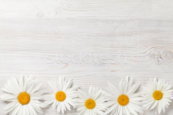 Garden chamomile flowers Stock photo © karandaev
