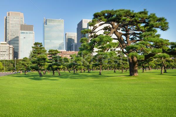 Pine trees park in front of skyscrapers Stock photo © karandaev