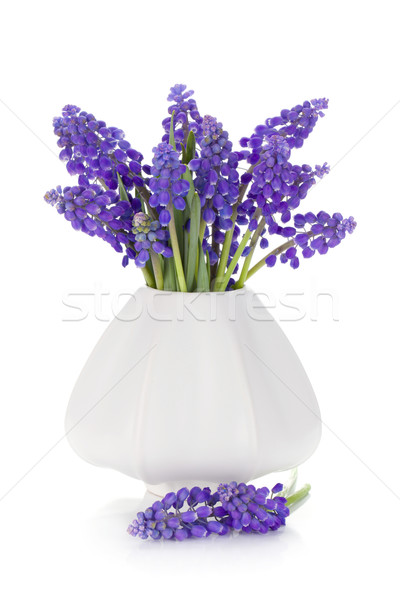 Azul jacinto flores vaso isolado branco Foto stock © karandaev
