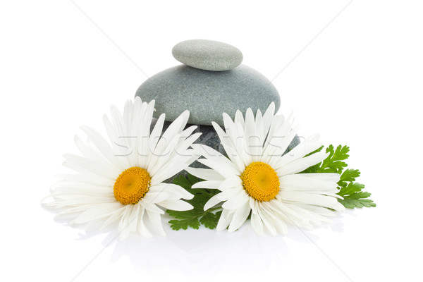 Daisy camomile flower and sea stones Stock photo © karandaev