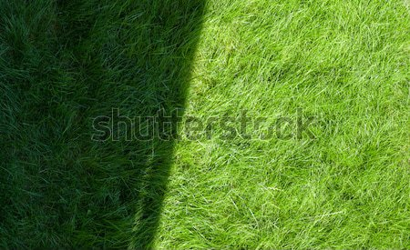 Green grass field with shadow and sunny zone Stock photo © karandaev