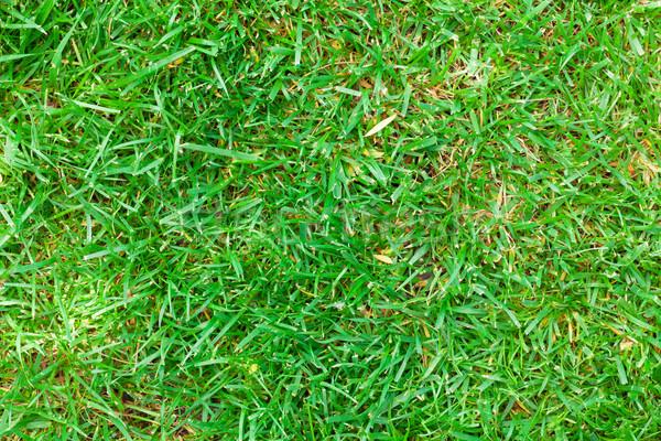 Groen gras veld weide top voorjaar Stockfoto © karandaev