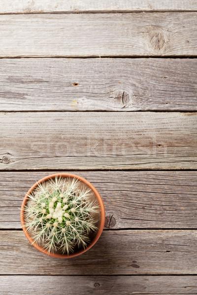 Cactus plant bloempot houten tafel top Stockfoto © karandaev