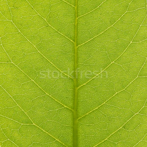 Green leaf texture, closeup Stock photo © karandaev