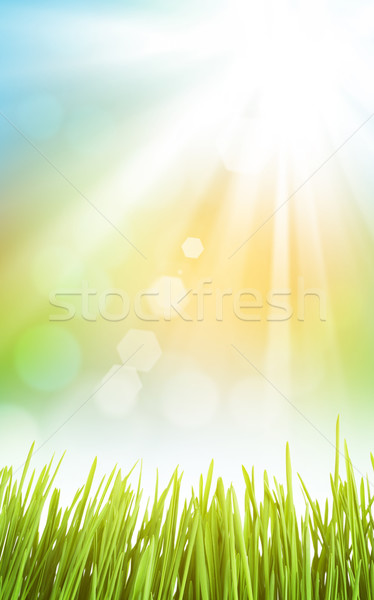 Abstract sunny spring background with grass Stock photo © karandaev
