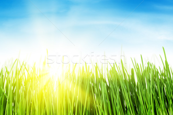 Green grass field and blue sky with sun Stock photo © karandaev