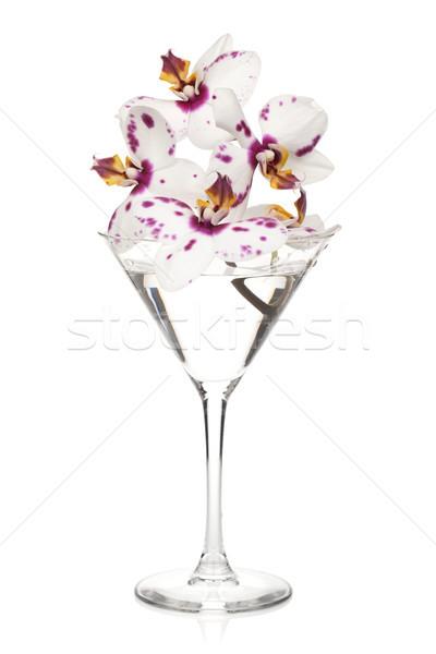 Orchidea fiori cocktail vetro isolato bianco Foto d'archivio © karandaev