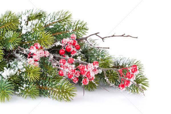Christmas decorative snow branch with holly berry Stock photo © karandaev
