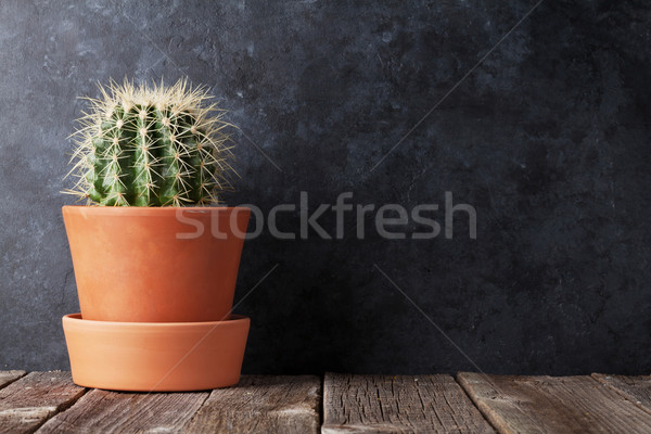 Cactus in front of chalk board Stock photo © karandaev