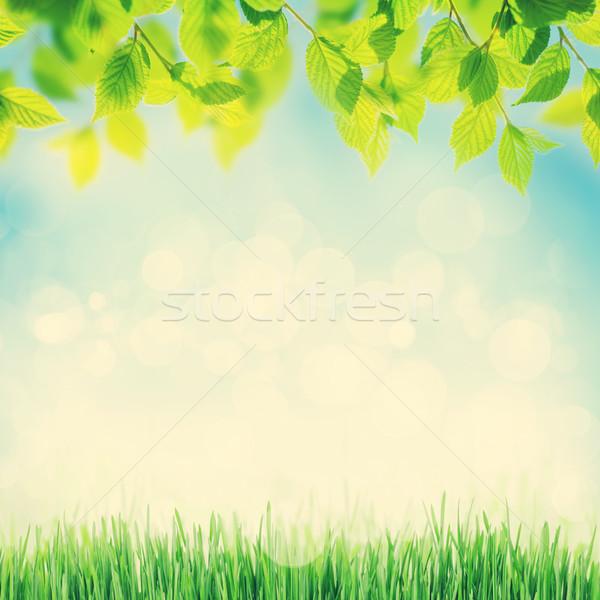 аннотация Солнечный весны трава ромашка цветы Сток-фото © karandaev