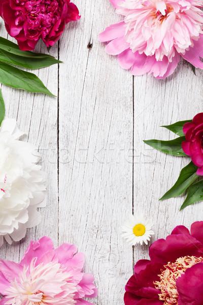 Garden peony flowers Stock photo © karandaev