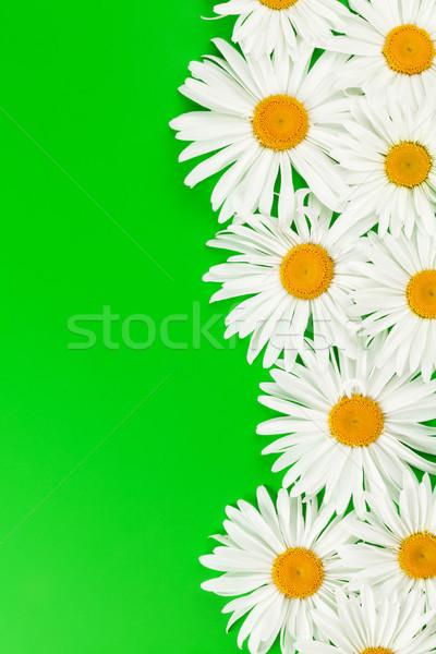 Jardín manzanilla flores verde superior vista Foto stock © karandaev