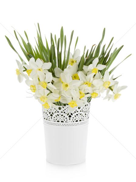 花束 白 水仙 植木鉢 孤立した 春 ストックフォト © karandaev