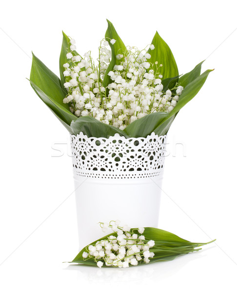 Lily of the valley Stock photo © karandaev