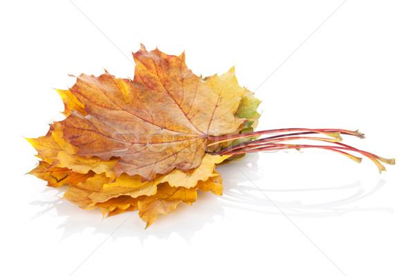 Colorato autunno acero foglie isolato bianco Foto d'archivio © karandaev