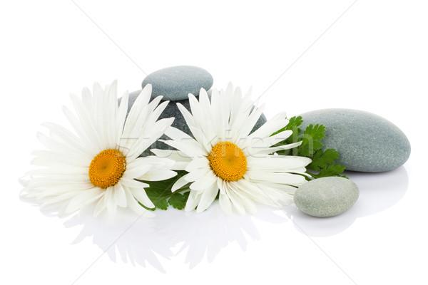 Stock fotó: Százszorszép · kamilla · virág · tenger · kövek · izolált