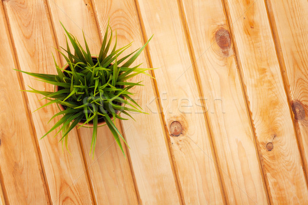 Potted grass flower over wooden table background Stock photo © karandaev