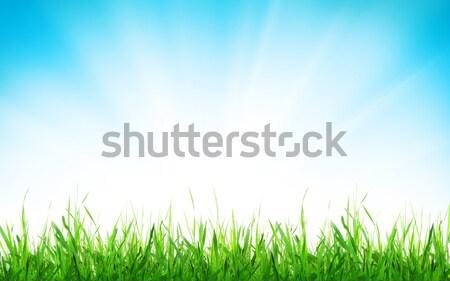 Absztrakt napos tavasz fű húsvét égbolt Stock fotó © karandaev