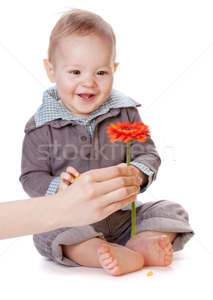 Small baby looking on red flower Stock photo © karandaev