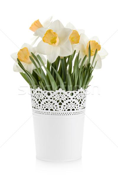Bouquet of white daffodils in flowerpot Stock photo © karandaev