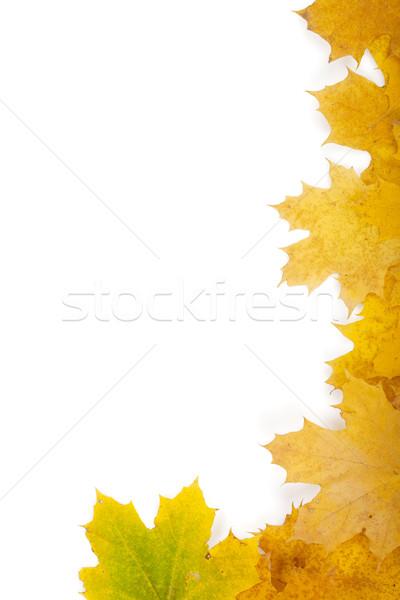 Autumn leaves frame Stock photo © karandaev