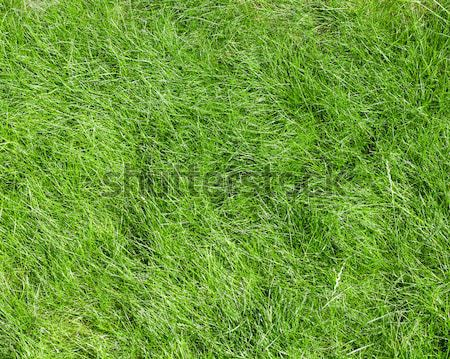 Groen gras veld textuur gras natuur ruimte Stockfoto © karandaev