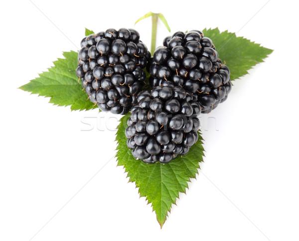 Three blackberries on leaves Stock photo © karandaev