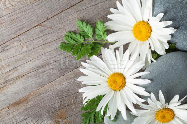 Daisy manzanilla flor mar piedras flores Foto stock © karandaev