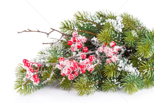 Noël branche Berry neige arbre Photo stock © karandaev