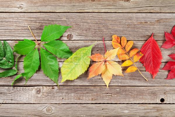 Jesienią kolorowy pozostawia tekstury drewna Zdjęcia stock © karandaev