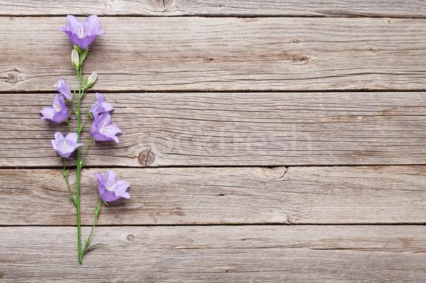 青 鐘 花 木製 コピースペース 花 ストックフォト © karandaev