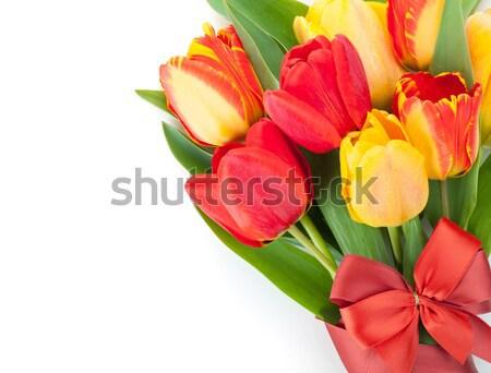 Friss színes tulipánok szalag íj izolált Stock fotó © karandaev