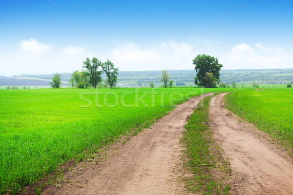 Countryside road through the green grass field Stock photo © karandaev