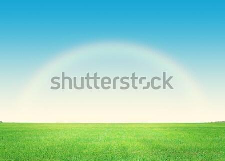 Groen gras veld blauwe hemel hemel boom voorjaar Stockfoto © karandaev