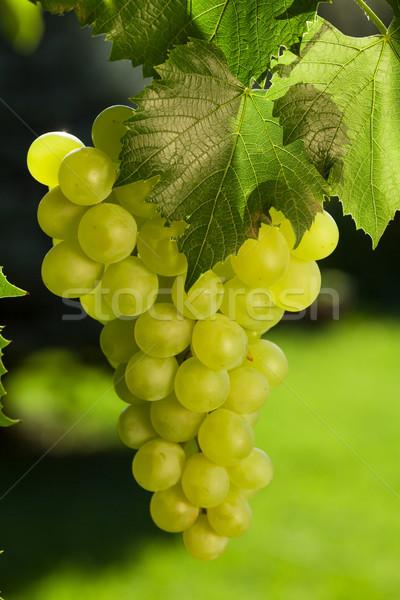 Videira monte uvas branco abstrato natureza Foto stock © karandaev
